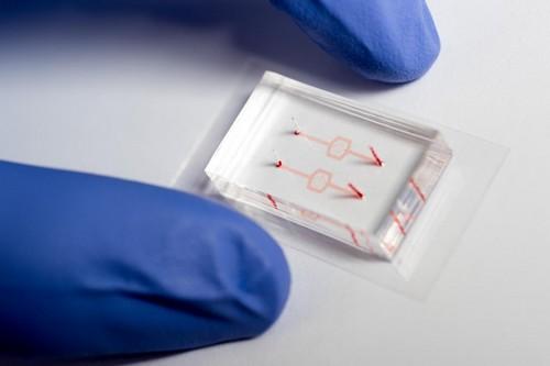 circuito-vasos-sanguineos