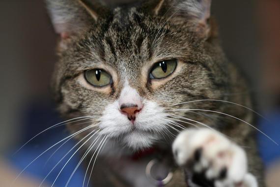 un-gato-de-schroedinger-vivo-y-muerto-en-dos-cajas-al-mismo-tiempo_image_380